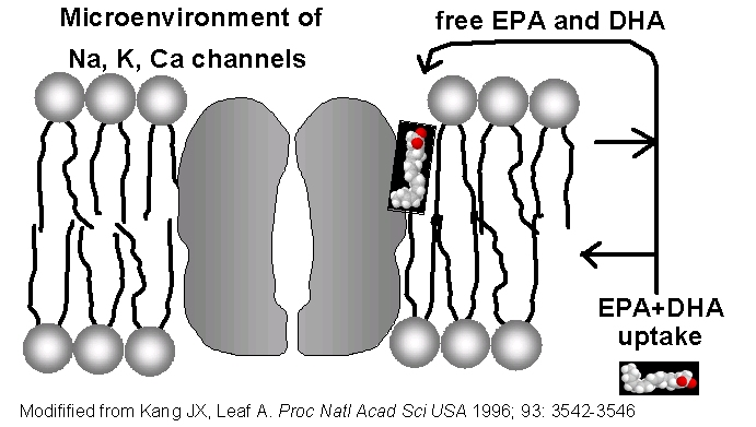 EPA